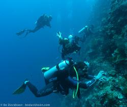 BD-090921-Bunaken-9213417-Homo-sapiens.-Linnaeus.-1758-[Diver].jpg